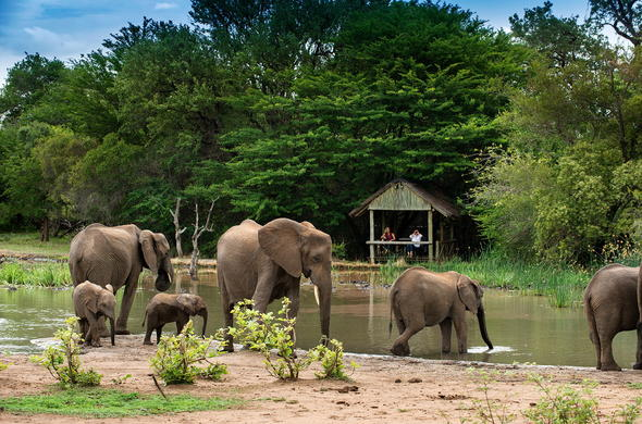 Watch elephants walk past Tanda Tula Safari Camp.