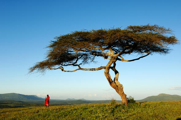 Explore the area with a knowledgeable Maasai guide.