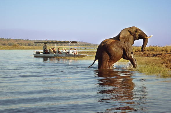Guests encounter an elephant on the sunset cruise.