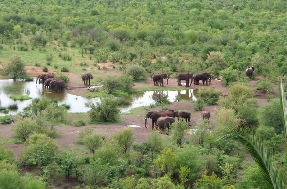 See elephants on a Victoria Falls Safari.
