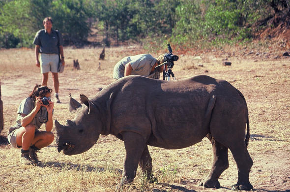 Walking with Rhino.