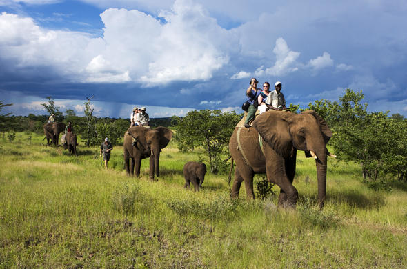 Elephant back safaris.