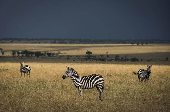 Enjoy a day out in the wild and spot zebras and other wildlife in the reserve.